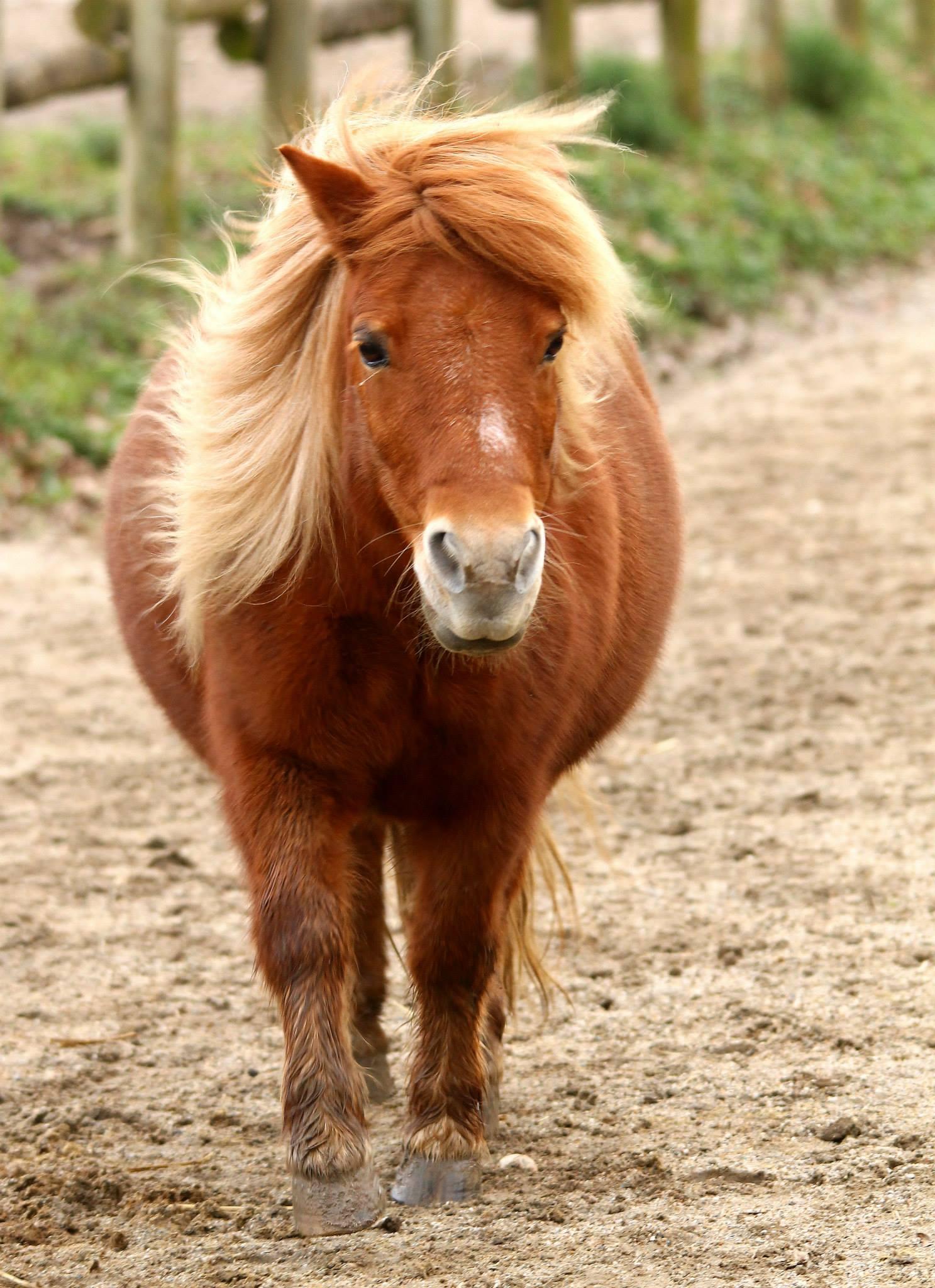 poney image