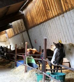 Box pour poney au centr equestre de castres