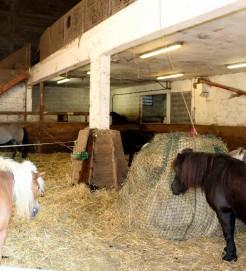 Stabulation poney centr equestre