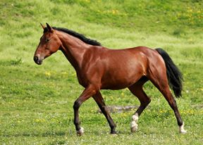 Taquine Une Foy 9 avril 2009 Trotteur Français