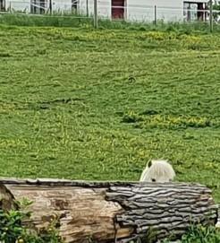 Pépito joue à cache-cache